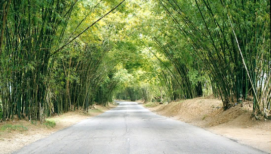 Bamboo Avenue Giamaica