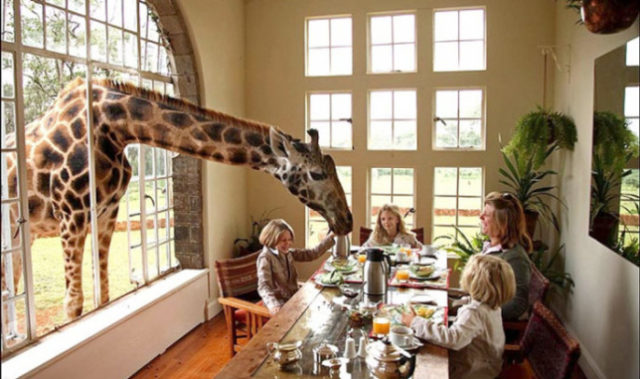 Giraffe di Manor