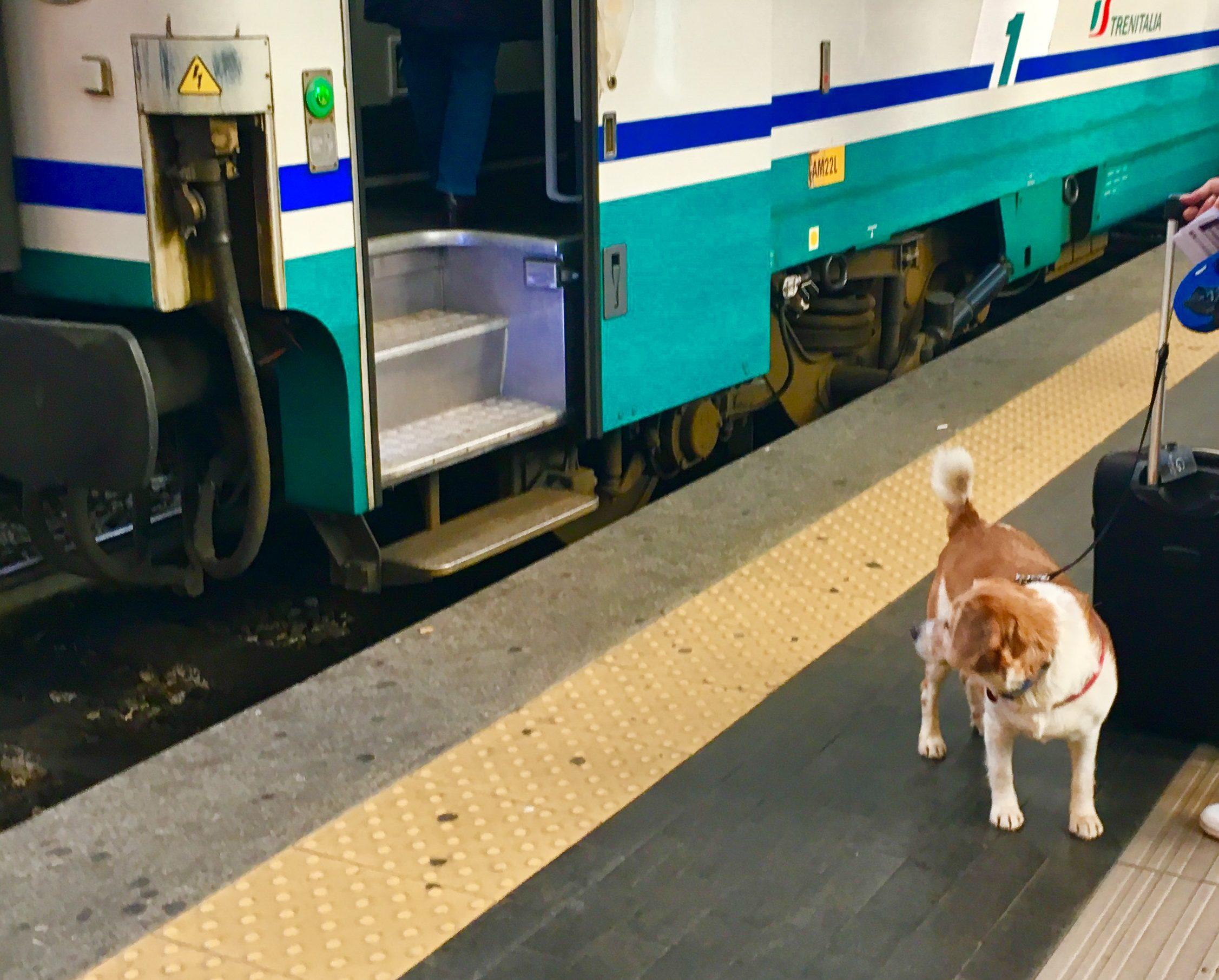 Viaggiare in treno con il cane