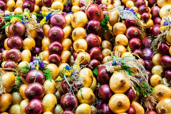 mercato-delle-cipolle-di-berna-travelfeliz