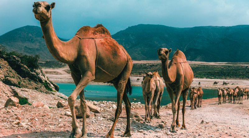 Il sultanato dell'Oman, la meta emergente che ti conquisterà!